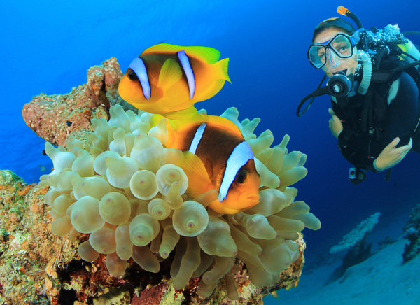 Diver with beautiful underwater world Stock Photo 05