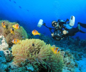 Diver with beautiful underwater world Stock Photo 06
