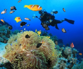 Diver with beautiful underwater world Stock Photo 13