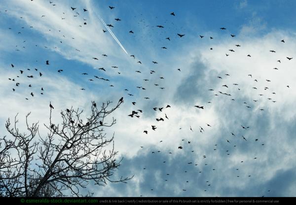 Flocks of Birds Photoshop Brushes