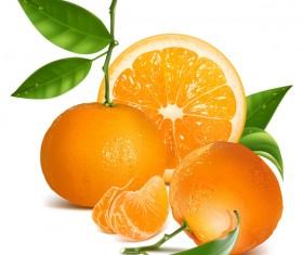 Fresh citrus illustration vector 01