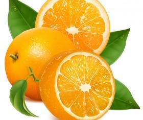 Fresh citrus illustration vector 02