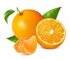 Fresh citrus illustration vector 03