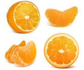 Fresh citrus illustration vector 05