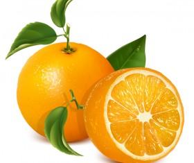 Fresh citrus illustration vector 06