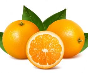 Fresh citrus illustration vector 07