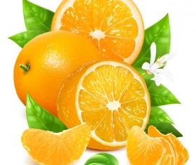Fresh citrus illustration vector 08