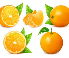 Fresh citrus illustration vector 09