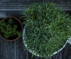 Fresh green trees in pots Stock Photo