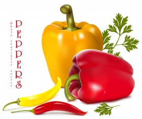 Fresh pepper illustration vector 03