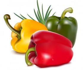 Fresh pepper illustration vector 04