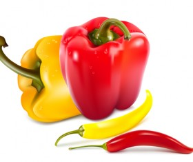 Fresh pepper illustration vector 06