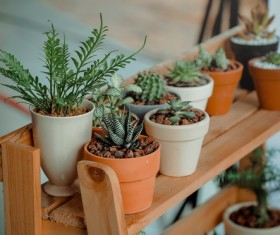 Green succulents in pots Stock Photo