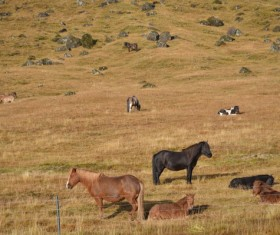 Highland grazing horses Stock Photo