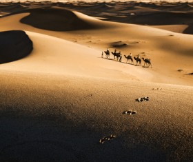 People in the desert experience camel travel Stock Photo 07
