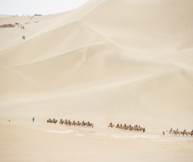 People in the desert experience camel travel Stock Photo 09