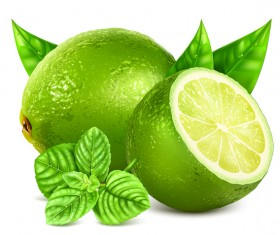 Realistic green citrus illustration vector 01