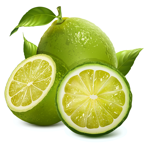 Realistic green citrus illustration vector 02