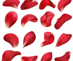 Red flower petal illustration vector 02