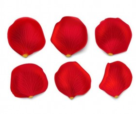 Red flower petal illustration vector 03