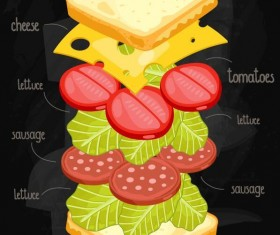 Sandwich ingredients infographic vector 03