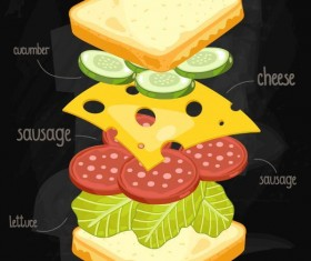 Sandwich ingredients infographic vector 04