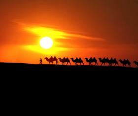 Tuareg Desert Caravan Stock Photo 02