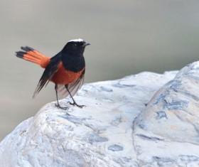 White Top Creek bird Stock Photo