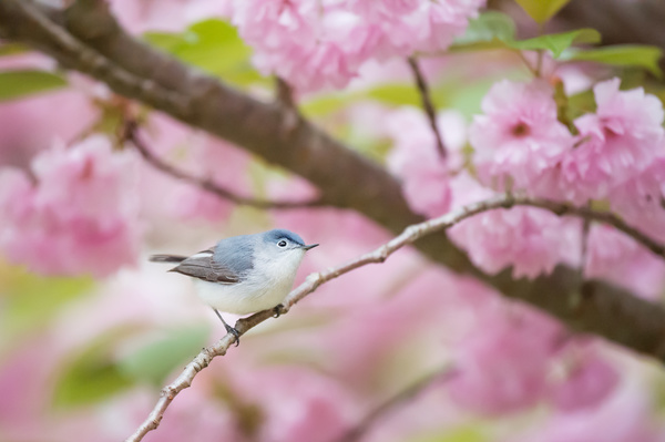 small bird on flowers tree Stock Photo