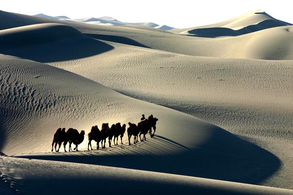 walking in the desert Camel Stock Photo 01