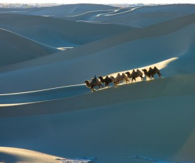 walking in the desert Camel Stock Photo 02