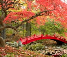 Beautiful Japanese garden Stock Photo 04