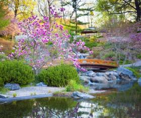Beautiful Japanese garden Stock Photo 08