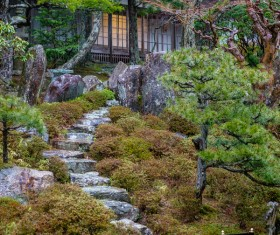 Beautiful Japanese garden Stock Photo 12