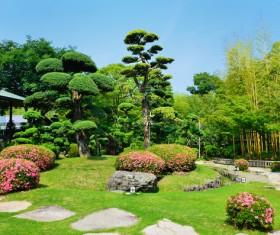 Beautiful Japanese garden Stock Photo 13