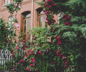 Beautiful flowers outside the house Stock Photo