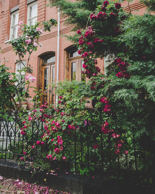 Beautiful flowers outside the house Stock Photo free download