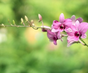Beautiful purple orchid close-up Stock Photo