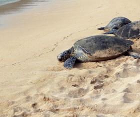 Big sea turtle on the beach Stock Photo