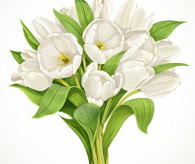 Bouquet of white tulips with white background vector