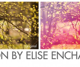 Branch Blur Photoshop Action