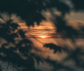 Calm sea scene at sunset through leaves Stock Photo