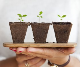 Closeup hands holding growing shoots Stock Photo