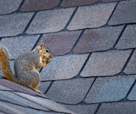Eurasian red squirrel Stock Photo 03