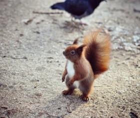 Eurasian red squirrel Stock Photo 05