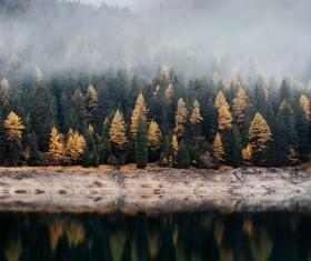Fog shrouded forest Stock Photo