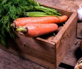Fresh carrots Stock Photo 03