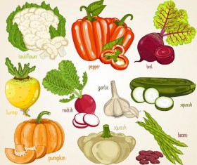 Fresh vegetables with name vector illustration 02