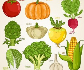 Fresh vegetables with name vector illustration 03