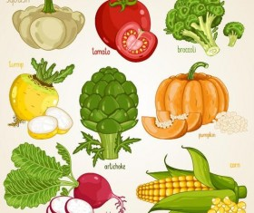 Fresh vegetables with name vector illustration 04